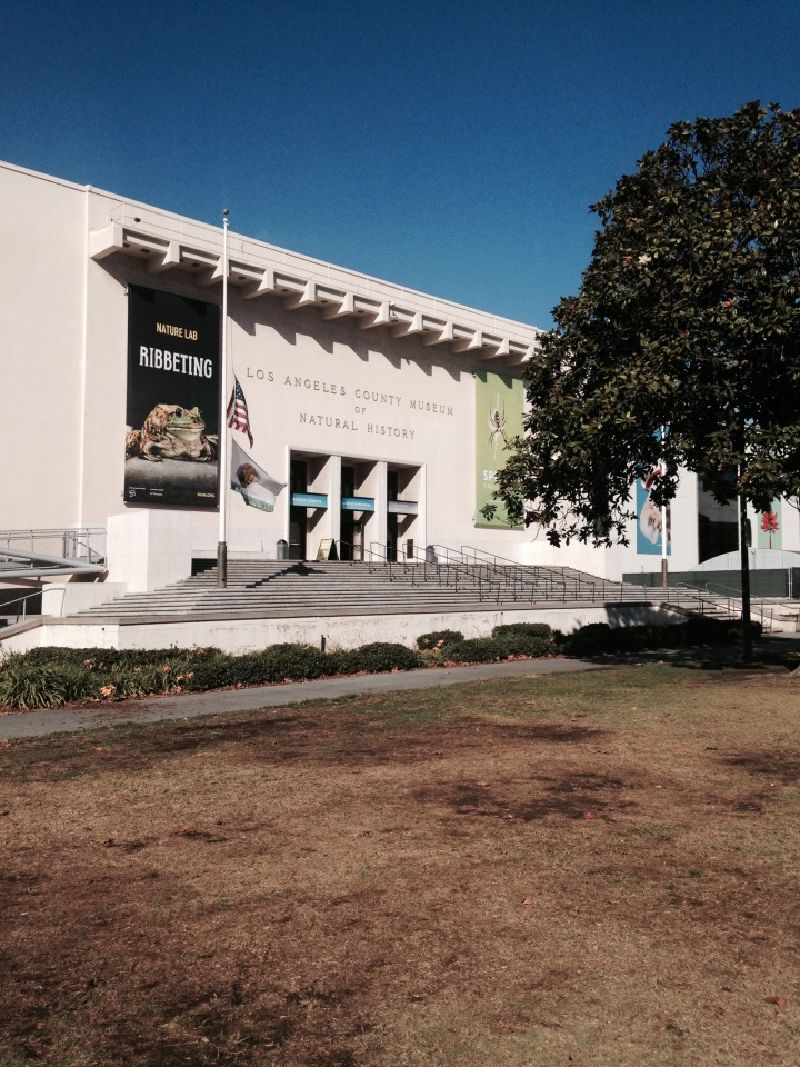 know i couldn't leave without at least one museum visit. highly recommend los angeles county museum of natural history. {900 exposition blvd., 90007}